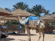 Sharm El Naga - Beach